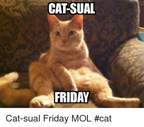 Friday cats