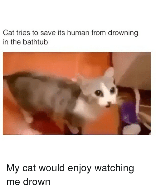 Funny, Cat, and Human: Cat tries to save its human from drowning  in the bathtub My cat would enjoy watching me drown