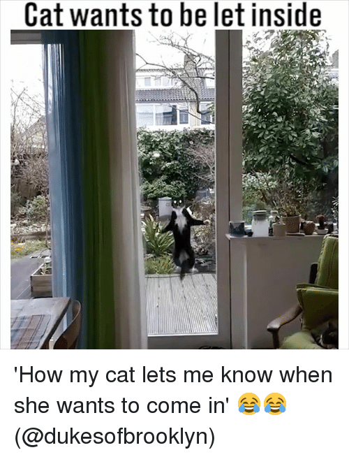 Memes, 🤖, and How: Cat wants to be let inside 'How my cat lets me know when she wants to come in' 😂😂 (@dukesofbrooklyn)