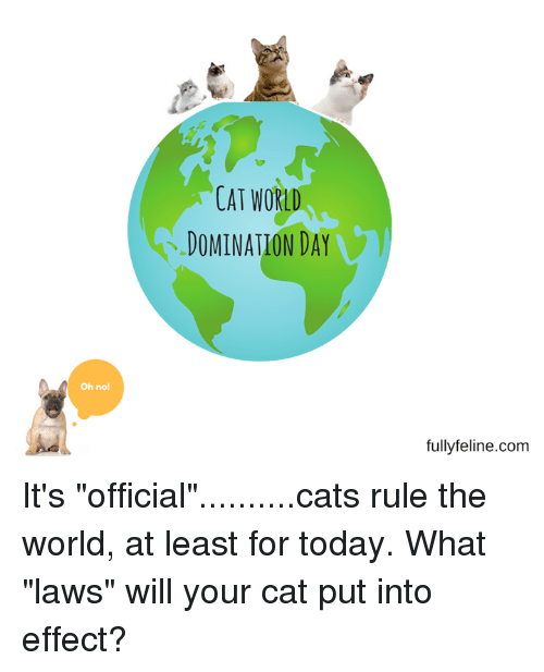 cats rule world