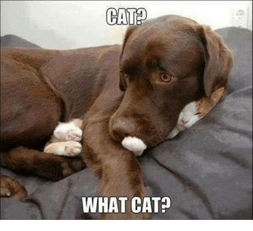 catd what cat cats meme on me me