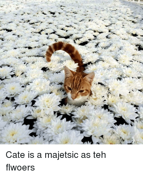 Teh, Cate, and Is A