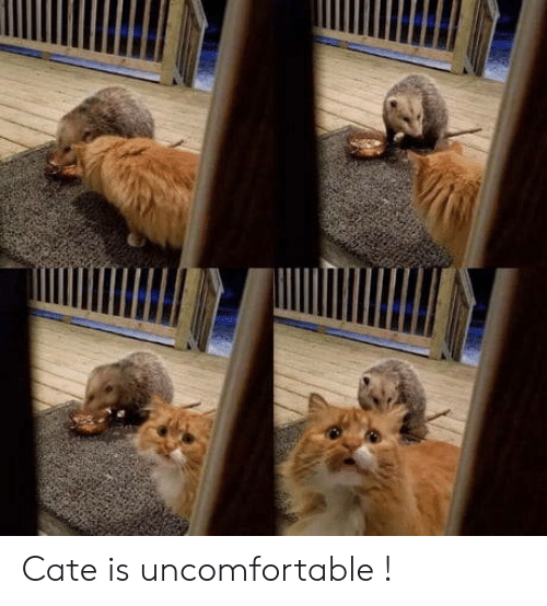 Uncomfortable and Cate: Cate is uncomfortable !