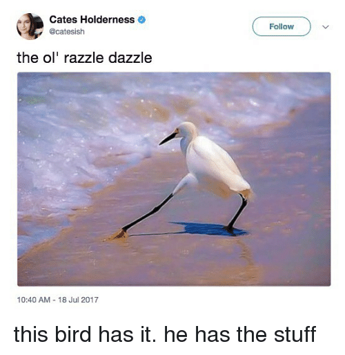 Stuff, Relatable, and Dazzle: Cates Holderness  @catesish  derness o  Follow  the ol' razzle dazzle  10:40 AM - 18 Jul 2017 this bird has it. he has the stuff