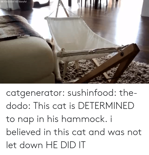 Tumblr, Blog, and Hammock: catgenerator:  sushinfood:  the-dodo:  This cat is DETERMINED to nap in his hammock.  i believed in this cat and was not let down  HE DID IT