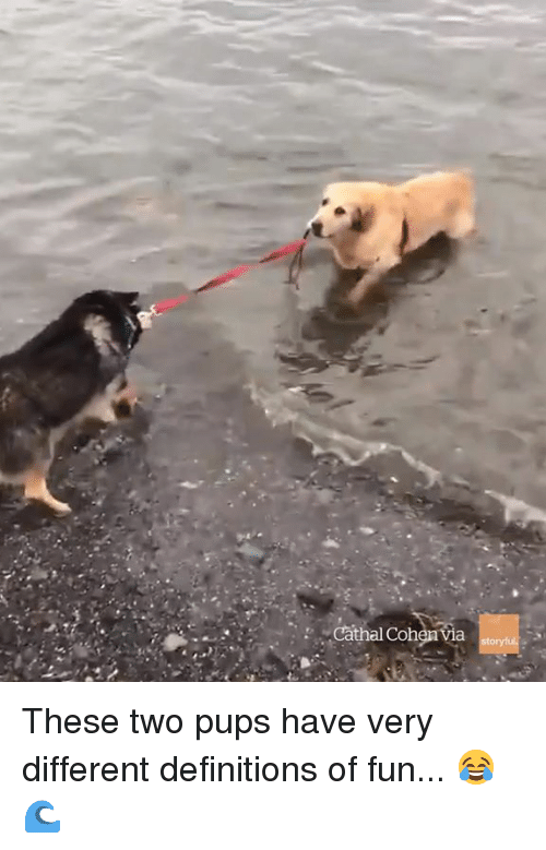 Fun, Definitions, and Different: Cathal Colh These two pups have very different definitions of fun... 😂🌊
