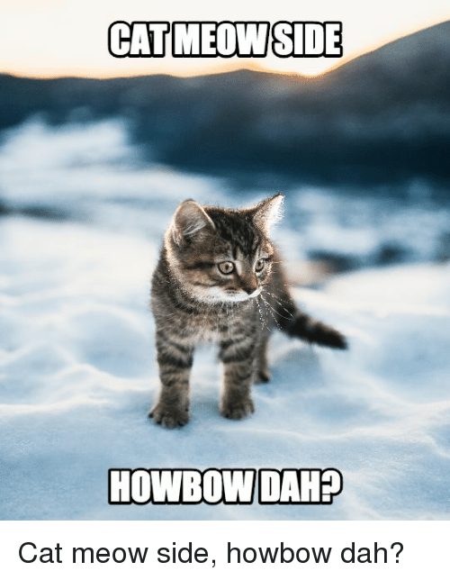 catmeowside howbow dahp cat meow side howbow dah 13628106 search funny cat meow memes on me me