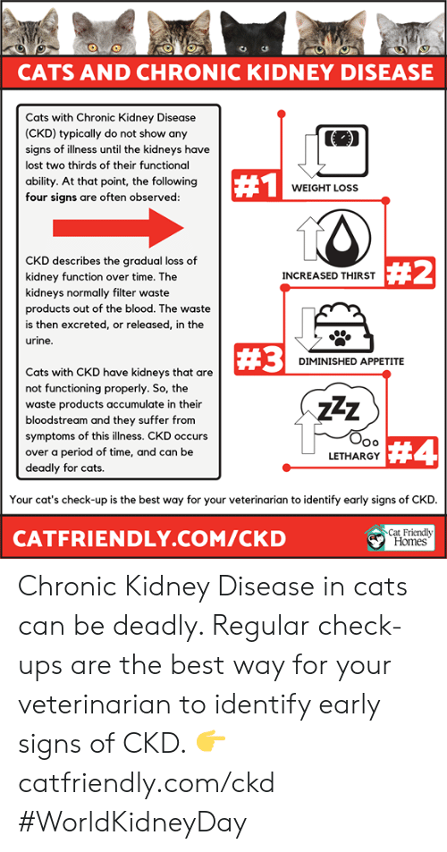 Cats, Memes, and Period: CATS AND CHRONIC KIDNEY DISEASE  ts with Chronic Kidney Disease  (CKD) typically do not show any  signs of illness until the kidneys have  lost two thirds of their functional  ability. At that point, the following  four signs are often observed  #1  WEIGHT LOSS  CKD describes the gradual loss of  kidney function over time. The  kidneys normally filter waste  products out of the blood. The waste  is then excreted, or released, in the  urine  #2  INCREASED THIRST  #3  DIMINISHED APPETITE  Cats with CKD have kidneys that are  not functioning properly. So, the  waste products accumulate in their  bloodstream and they suffer from  symptoms of this illness. CKD occurs  over a period of time, and can be  deadly for cats.  7Z  Oo  LETHARGY  #4  Your cat's check-up is the best way for your veterinarian to identify early signs of CKD  CATFRIENDLY.COM/CKD  Cat Friendly  Homes Chronic Kidney Disease in cats can be deadly. Regular check-ups are the best way for your veterinarian to identify early signs of CKD. 👉 catfriendly.com/ckd #WorldKidneyDay