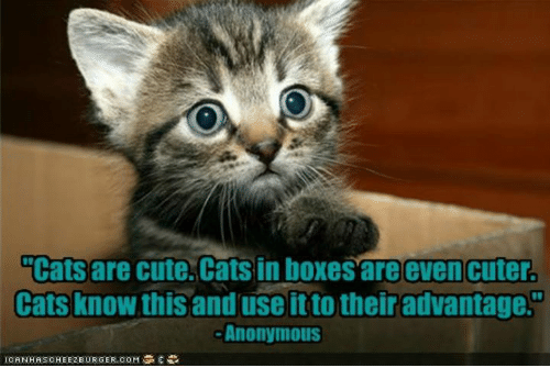 cats are cute cats in boxes are even cuter cats know this and use it