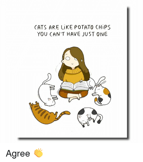 0680e230c CATS ARE LiKE POTATO CHiPS YOU CAN'T HAVE JUST ONE Agree 👏   Cats ...
