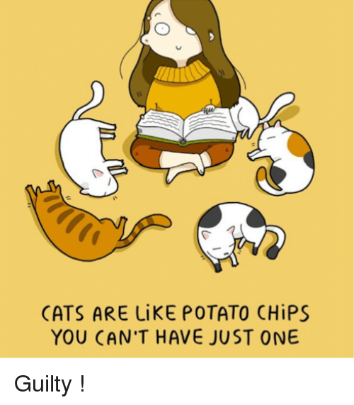 a2b4577b5 CATS ARE LiKE POTATO CHiPS YOU CAN'T HAVE JUST ONE Guilty !   Cats ...