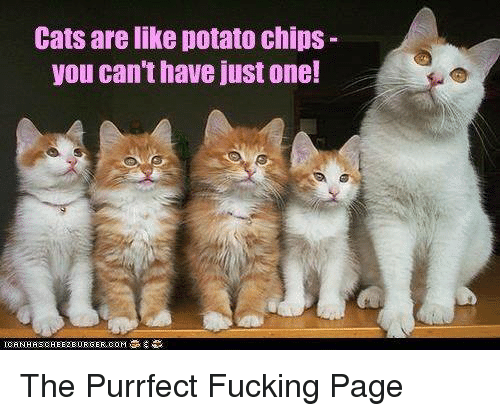 ec203813b Cats Are Like Potato Chips You Can'thave Just One! The Purrfect ...