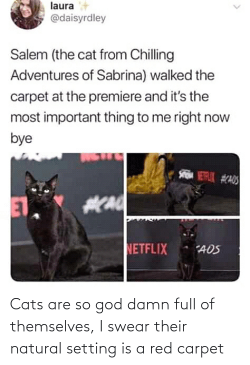 Cats, God, and Red: Cats are so god damn full of themselves, I swear their natural setting is a red carpet