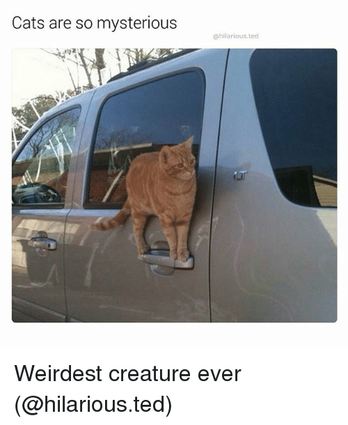 Cats, Funny, and Ted: Cats are so mysterious  @hilarious.ted Weirdest creature ever (@hilarious.ted)