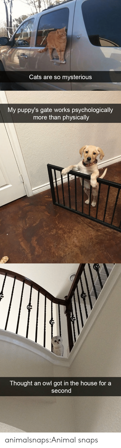 Cats, Target, and Tumblr: Cats are so mysterious   My puppy's gate works psychologically  more than physically   Thought an owl got in the house for a  second animalsnaps:Animal snaps