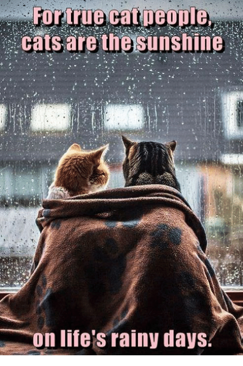 Image result for rainy tuesday cat images