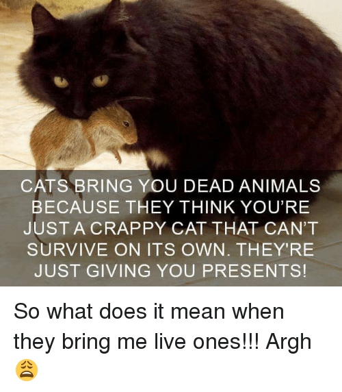 Cats Bring You Dead Animals Because They Think Youre Justa Crappy