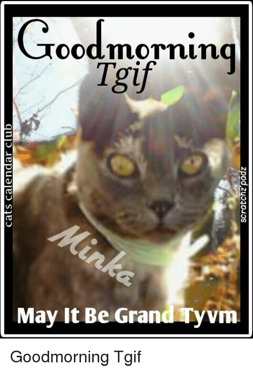 Cats Calendar Club Scratchzpadz Goodmorning Tgif May It Be Gran Vm