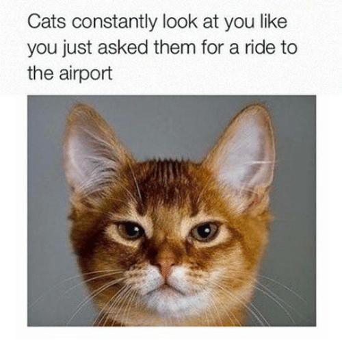 Cats, Relationships, and Them: Cats constantly look at you like  you just asked them for a ride to  the airport