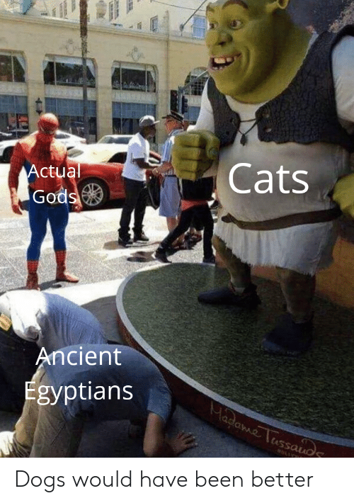 Cats Ctual Gods Ancient Egyptians Dogs Would Have Been