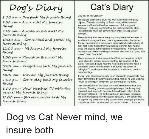 25+ Best Memes About Dogs Vs Cats