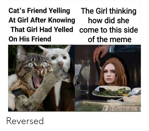 Cats Friend Yelling At Girl After Knowing That Girl Had