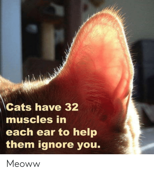 Cats, Help, and Them: Cats have 32  muscles in  each ear to help  them ignore you. Meoww