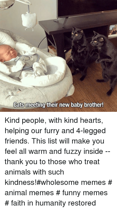 Animals, Cats, and Friends: Cats meeting their new baby brother! Kind people, with kind hearts, helping our furry and 4-legged friends. This list will make you feel all warm and fuzzy inside -- thank you to those who treat animals with such kindness!#wholesome memes # animal memes # funny memes # faith in humanity restored