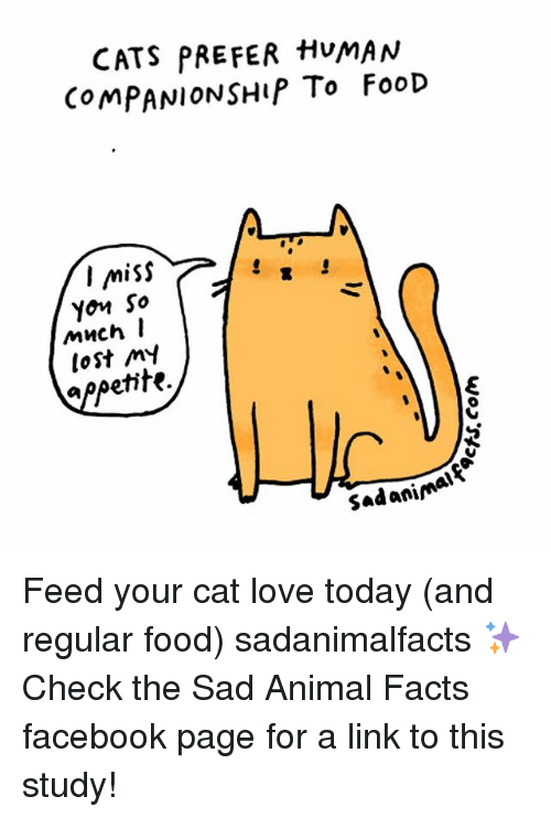 Cats, Facebook, and Facts: CATS PREFER HUMAN  COMPANIONSHIP To FooD  I miss  Yon So  I  much  my  petite  Sad animal Feed your cat love today (and regular food) sadanimalfacts ✨ Check the Sad Animal Facts facebook page for a link to this study!