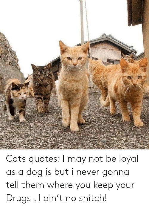 Cats, Drugs, and Snitch: Cats quotes: I may not be loyal as a dog is but i never gonna tell them where you keep your Drugs . I ain't no snitch!