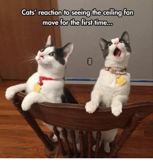Cats reaction to seeing the ceiling fan move for the first timeso memes and ceiling fan cats reaction to seeing the ceiling fan mozeypictures Choice Image
