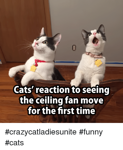 Cats reaction to seeing the ceiling fan move for the first time memes time and cats reaction to seeing the ceiling fan move aloadofball Choice Image