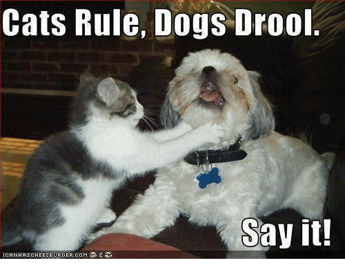 Cats Rule Dogs Drool Say It!