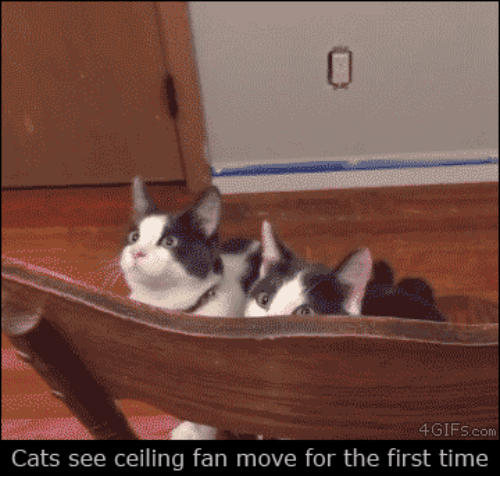 Cats see ceiling fan move for the first time cats meme on me cats time and ceiling fan cats see ceiling fan move for the first aloadofball Gallery