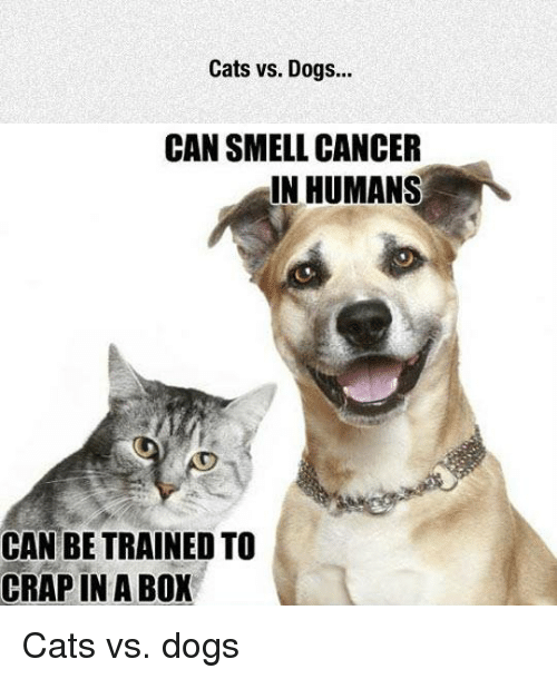 Cats vs Dogs CAN SMELL CANCER IN HUMANS CAN BE TRAINED TO