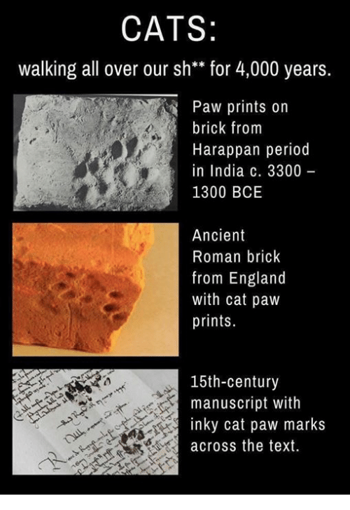 Cats Walking All Over Our Sh For 4000 Years Paw Prints On Brick From