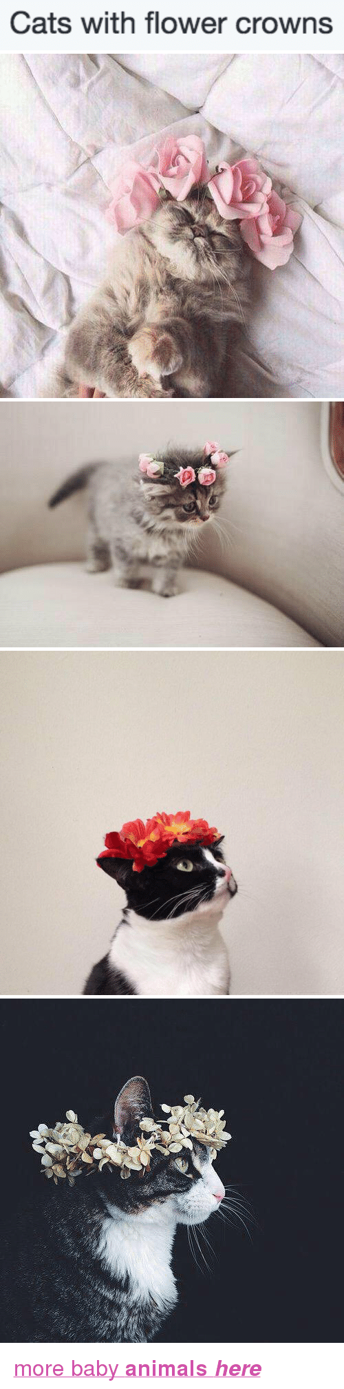 Cats with flower crowns pa hrefhttpbabyanimalgifstumblrcom animals cats and target cats with flower crowns pa izmirmasajfo