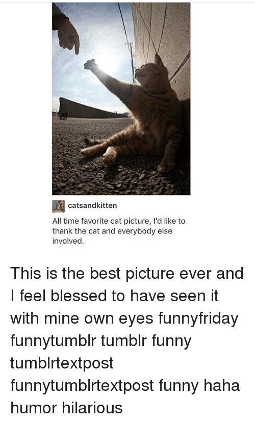 Blessed, Funny, and Memes: catsandkitten  All time favorite cat picture, l'd like to  thank the cat and everybody else  involved. This is the best picture ever and I feel blessed to have seen it with mine own eyes funnyfriday funnytumblr tumblr funny tumblrtextpost funnytumblrtextpost funny haha humor hilarious