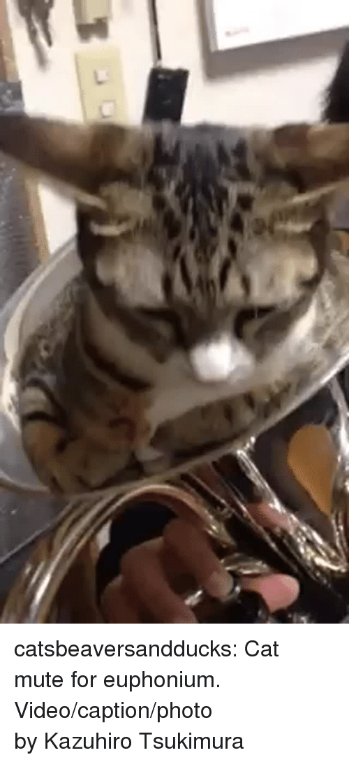 Facebook, Tumblr, and Mute: catsbeaversandducks:  Cat mute for euphonium. Video/caption/photo by Kazuhiro Tsukimura