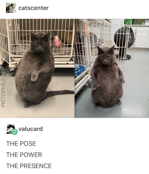 Catscenter Valucard THE POSE THE POWER THE PRESENCE PICTOPHILE APP