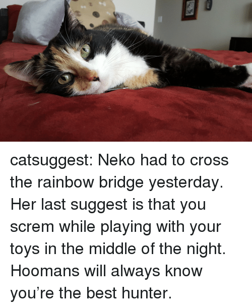 Target, Tumblr, and Best: catsuggest:  Neko had to cross the rainbow bridge yesterday. Her last suggest is that you screm while playing with your toys in the middle of the night. Hoomans will always know you're the best hunter.