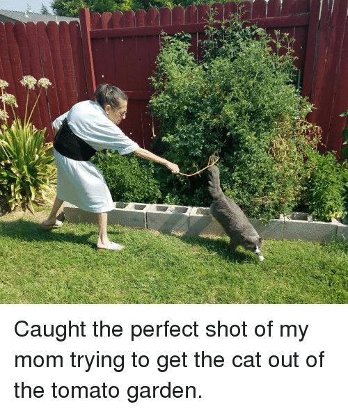 Caught the Perfect Shot of My Mom Trying to Get the Cat Out