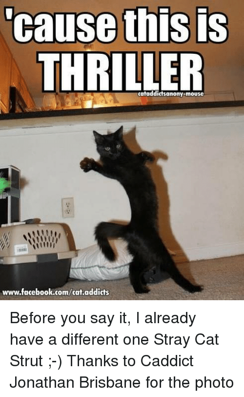 Memes, Thriller, and 🤖: Cause thIS IS  THRILLER  www.facebook.com/cat.addicts Before you say it, I already have a different one Stray Cat Strut ;-)  Thanks to Caddict Jonathan Brisbane for the photo