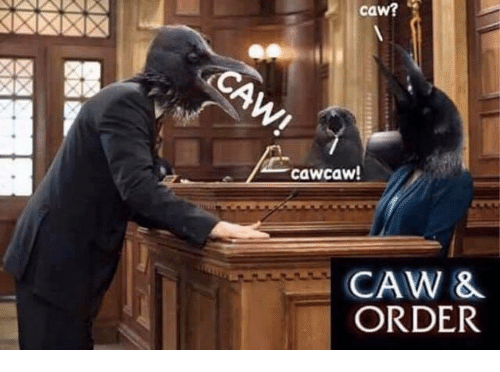 Caw and Order: caw?  cawcaw  CAW &  ORDER