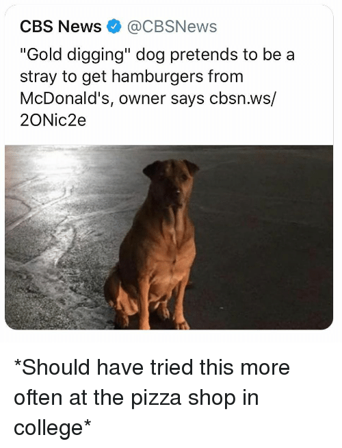 """College, McDonalds, and Memes: CBS News@CBSNews  """"Gold digging"""" dog pretends to be a  stray to get hamburgers from  McDonald's, owner says cbsn.ws/  2ONic2e *Should have tried this more often at the pizza shop in college*"""