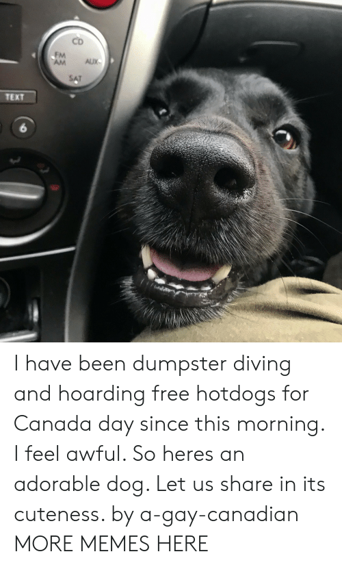 Dank, Memes, and Target: CD  FM  AM AUX  TEXT  6 I have been dumpster diving and hoarding free hotdogs for Canada day since this morning. I feel awful. So heres an adorable dog. Let us share in its cuteness. by a-gay-canadian MORE MEMES HERE