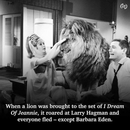 Memes, Lion, and 🤖: CD  When a lion was brought to the set of I Dream  Of Jeannie, it roared at Larry Hagman and  everyone fled except Barbara Eden.