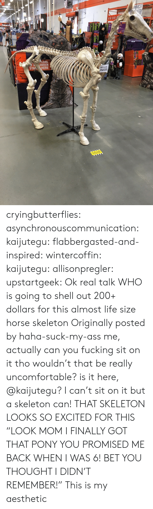 """Bailey Jay, Gif, and Life: ce  LEVEL  FH OWEEN  STAR ? HERE cryingbutterflies:  asynchronouscommunication:  kaijutegu:  flabbergasted-and-inspired:  wintercoffin:  kaijutegu:  allisonpregler:  upstartgeek:  Ok real talk WHO is going to shell out 200+ dollars for this almost life size horse skeleton  Originally posted by haha-suck-my-ass  me, actually  can you fucking sit on it tho  wouldn't that be really uncomfortable? is it here, @kaijutegu?  I can't sit on it but a skeleton can!  THAT SKELETON LOOKS SO EXCITED FOR THIS  """"LOOK MOM I FINALLY GOT THAT PONY YOU PROMISED ME BACK WHEN I WAS 6! BET YOU THOUGHT I DIDN'T REMEMBER!""""   This is my aesthetic"""