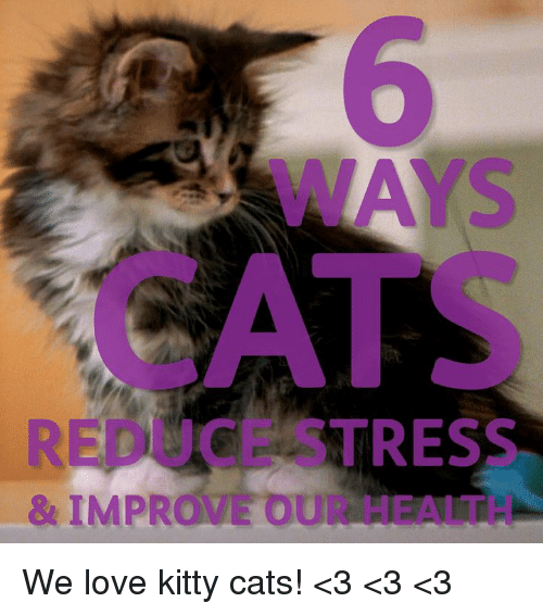 25 best memes about kitty cat kitty cat memes kitties memes and ce stress improve we love kitty cats sciox Image collections