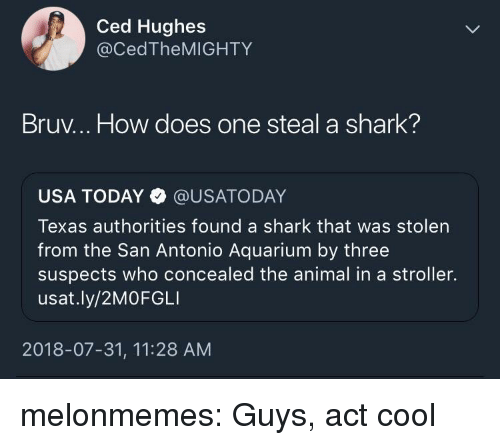 Tumblr, Shark, and Animal: Ced Hughes  @CedTheMIGHTY  Bruv... How does one steal a shark?  USA TODAY @USATODAY  Texas authorities found a shark that was stolen  from the San Antonio Aquarium by three  suspects who concealed the animal in a stroller.  usat.ly/2MOFGLI  2018-07-31, 11:28 AM melonmemes:  Guys, act cool